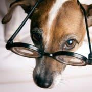 details-assurance-chien
