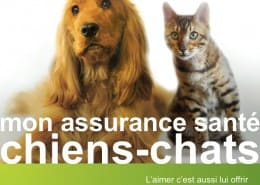 icone-april-chiens-chats