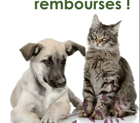 sant vet chiens chats expertise assurance conseils. Black Bedroom Furniture Sets. Home Design Ideas