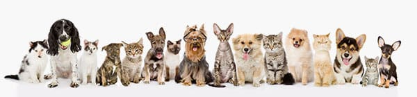 famille-chiens-chats